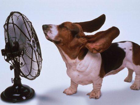 Arriva il caldo. Ci vuole il climatizzatore, il condizionatore!