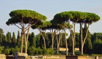 Idraulico ad Agosto a Roma
